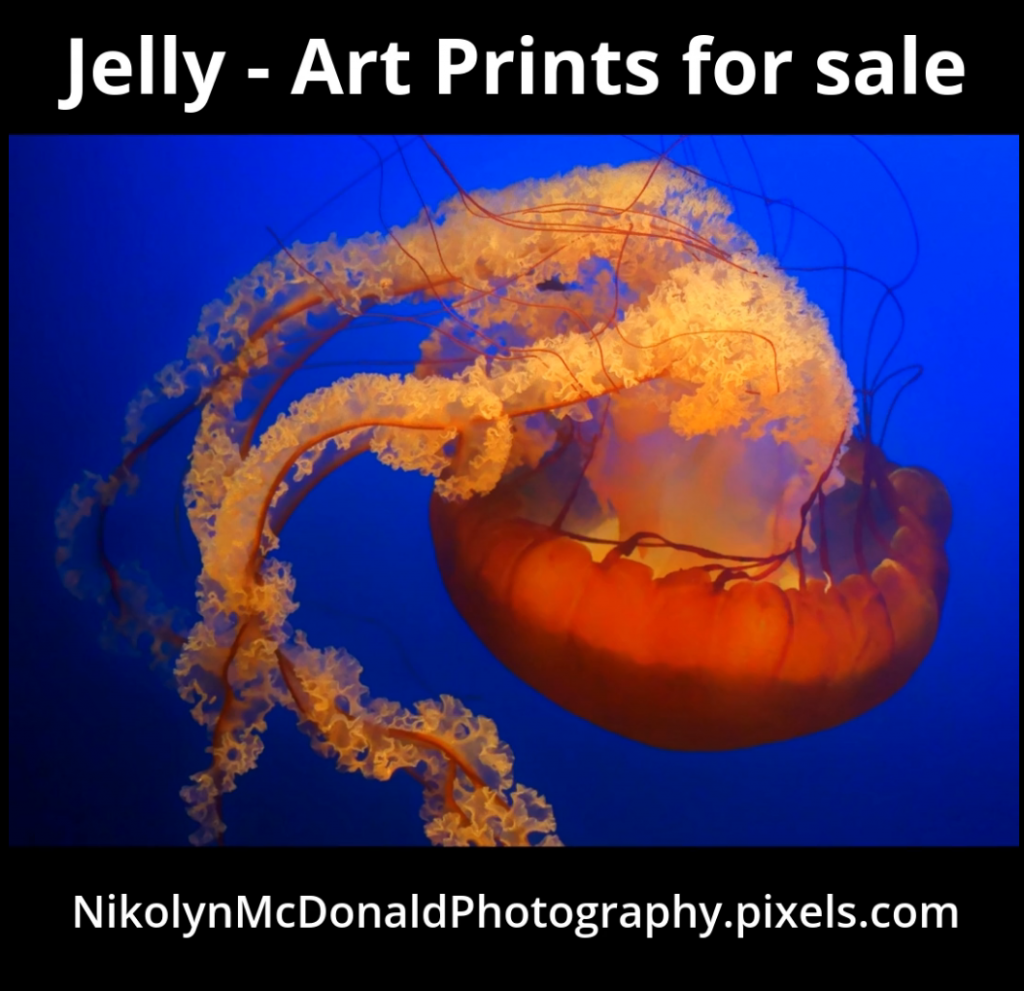Jellyfish Art Prints – Promo Video for Artist Nikolyn McDonald